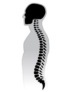 spine full form