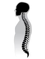 Human Spine.