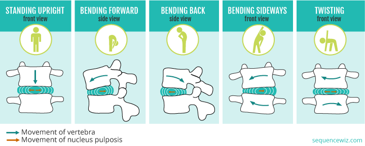 How the discs move when you bend your spine
