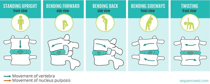 椎間板の水分量の日内変動
